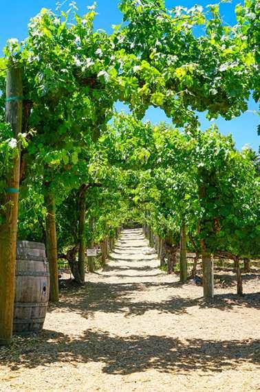 Wilson Creek Winery Vineyards