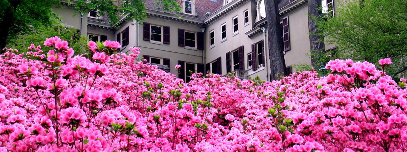 Mansion with Azaleas