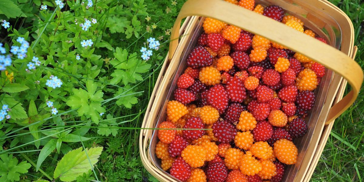 Berries in a Basket