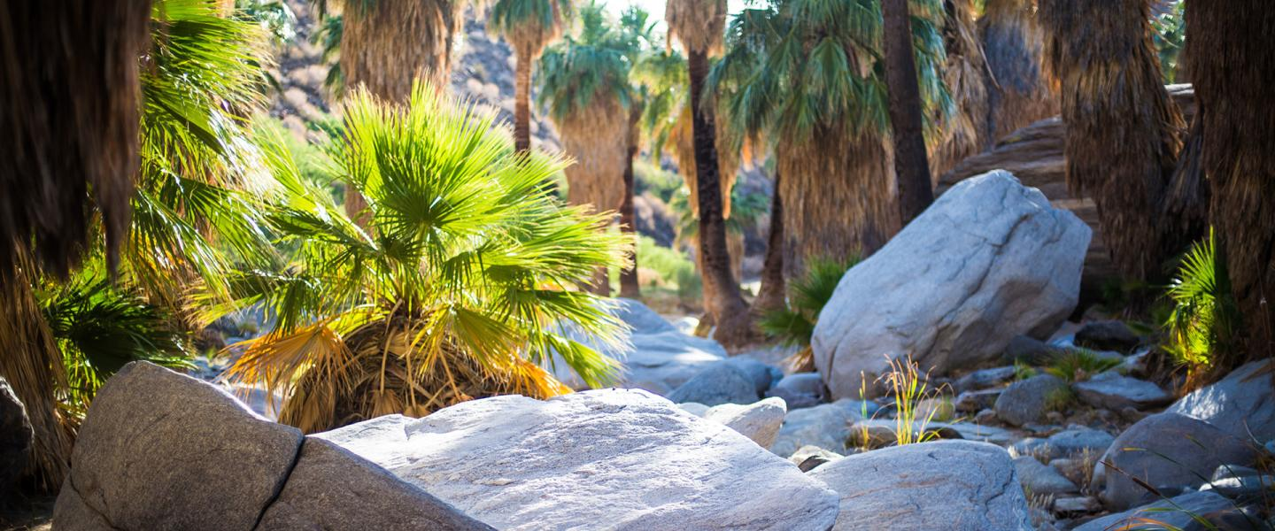 The best oasis hikes in greater palm springs solutioingenieria Images