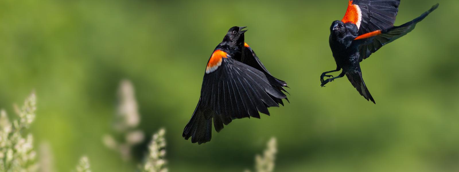 Bird Watching In Laurel Highlands Pa Scenic Drive
