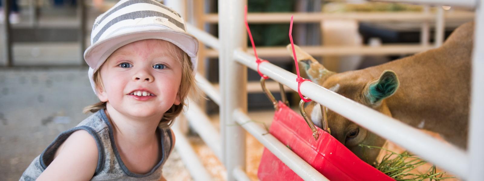 California Mid-State Fair Livestock