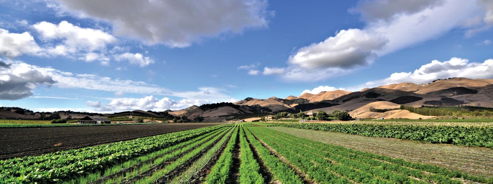 Talley Farms Vineyard 01