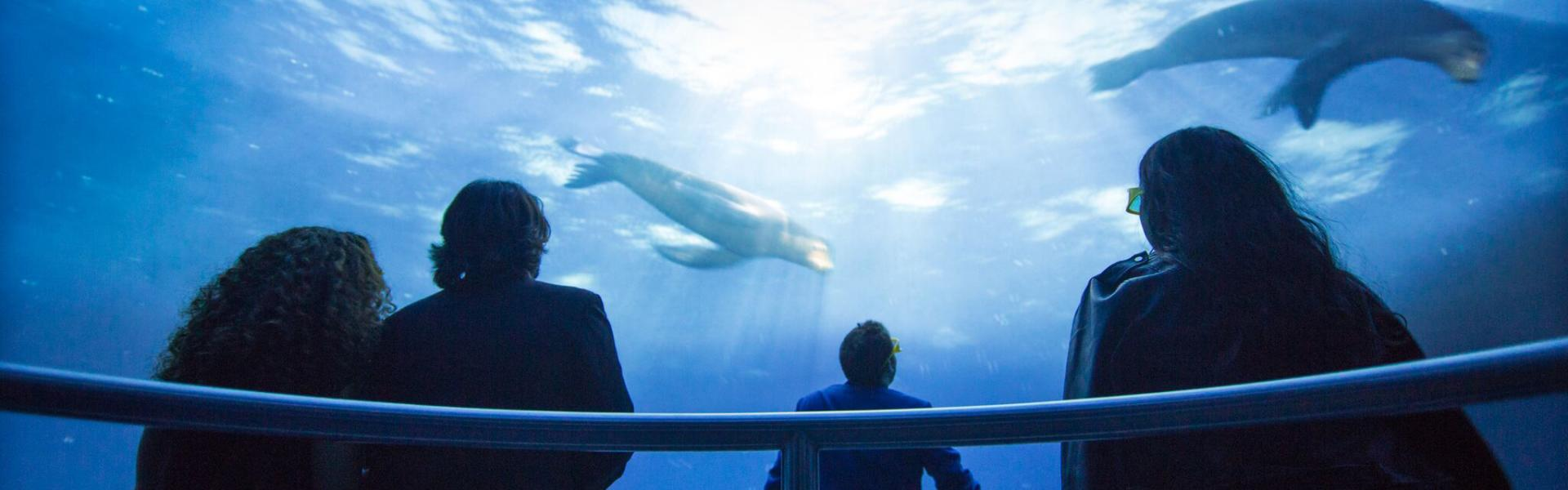 National Geographic Encounter: Ocean Odyssey, Manhattan, Attraction, Whats New in NYC,