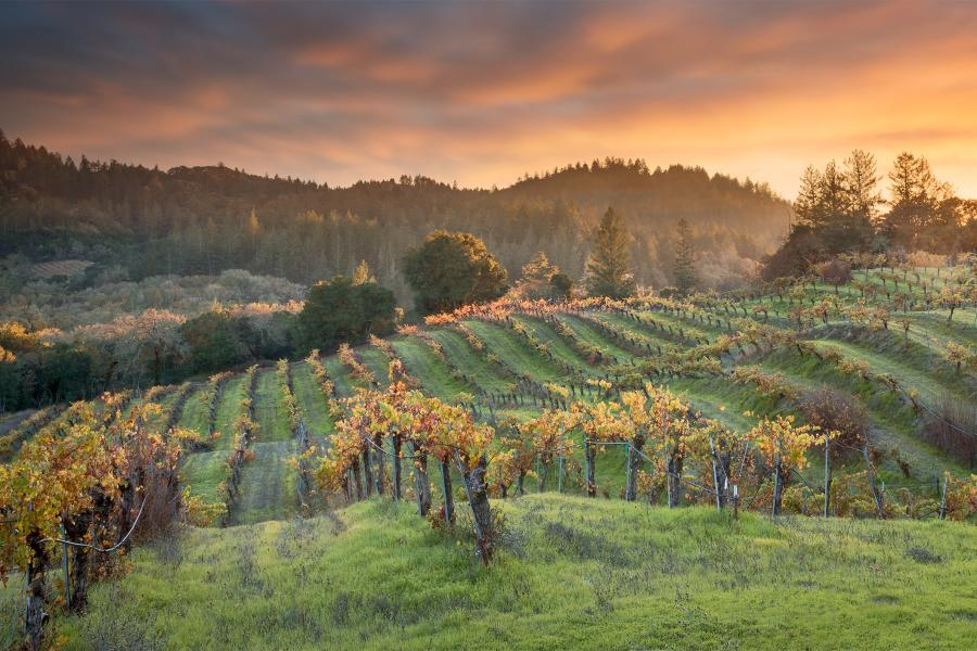 Winter In The Wineries Passport The Best Solution To Enjoy Tastes - 6 awesome boutique wineries to visit in napa