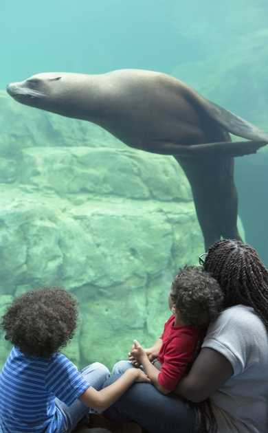 Sea Lion Landing