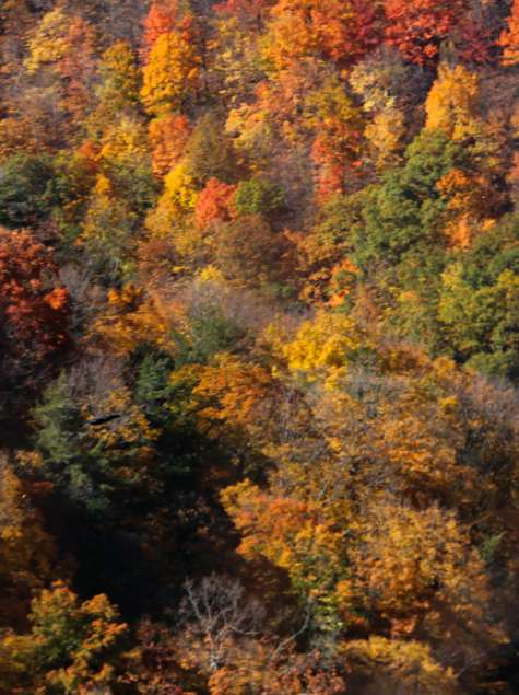 Thacher Park in the Fall