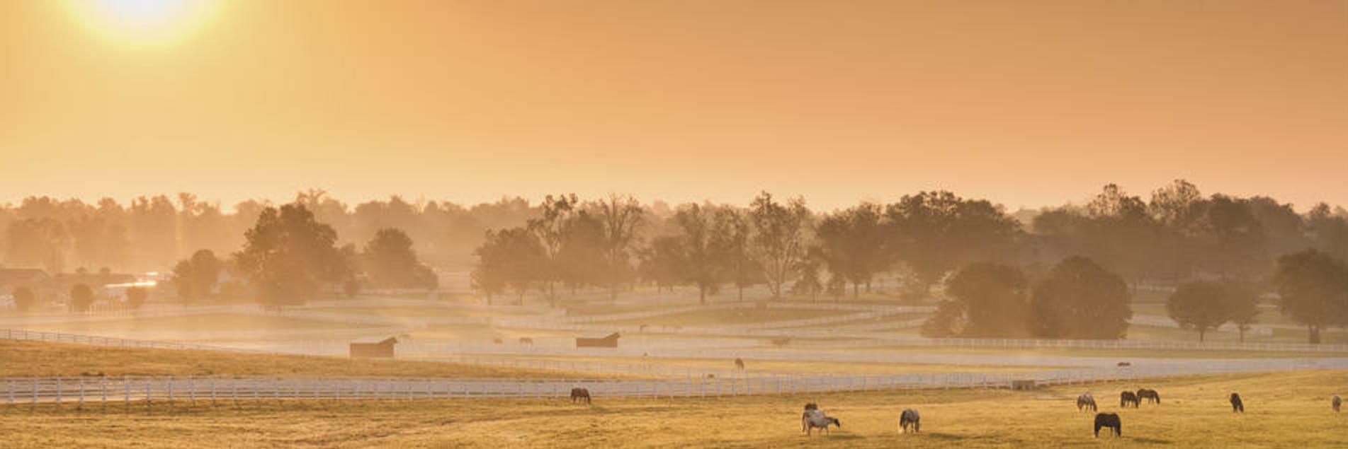 Horse Park Sunrise