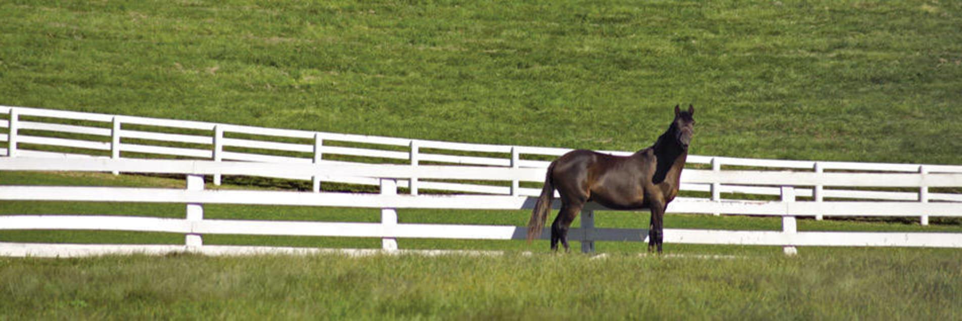 Lexington Horse Farm