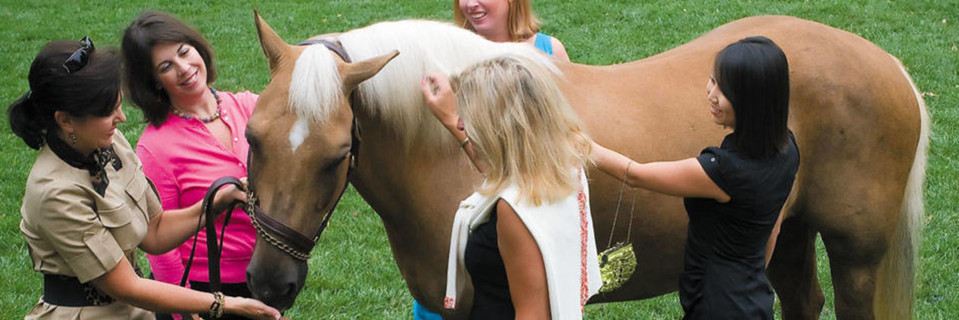 Ladies Feeding Horse