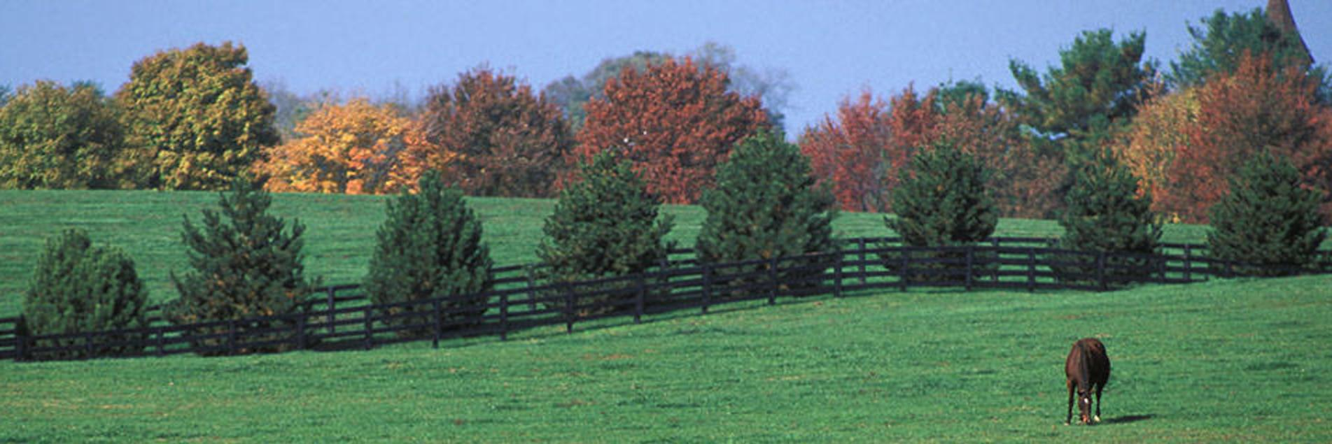 Fall Foliage in Lexington\'s Bluegrass Region