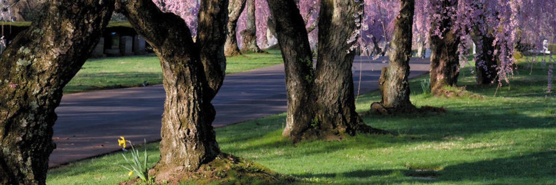 Lexington Cemetery: National Arboretum