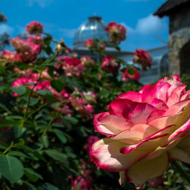 Lewis Ginter Garden