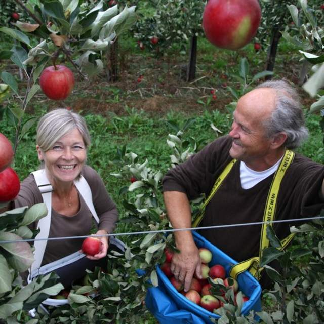 Fruit farmers are delighted with apples.