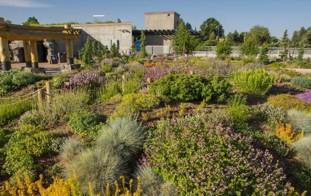 Only In Denver: Mordecai Childrenu0027s Garden At Denver Botanic Gardens