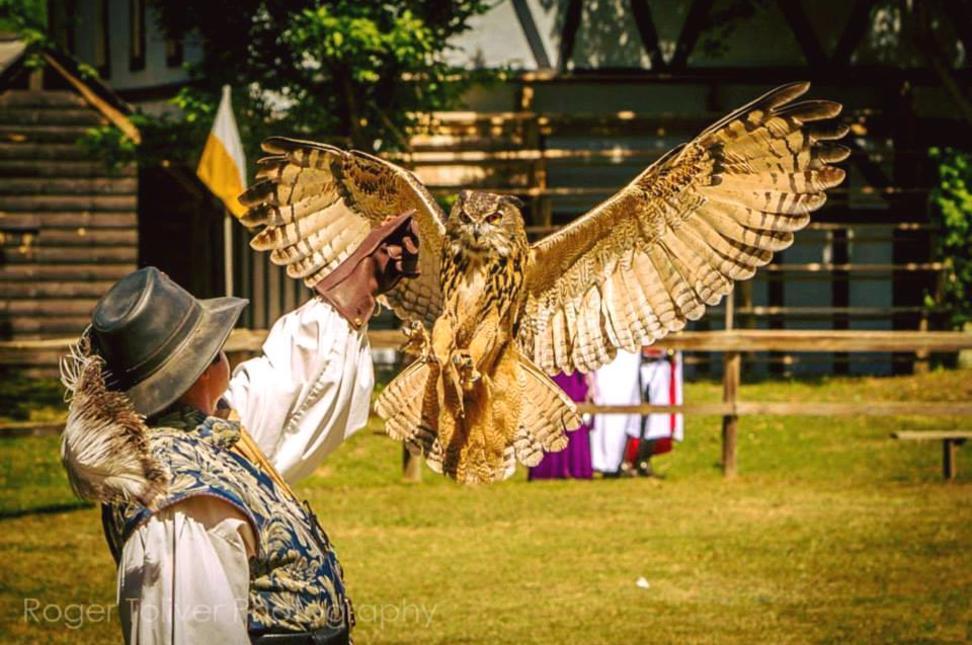 Birds of Prey 2 - Ren Faire