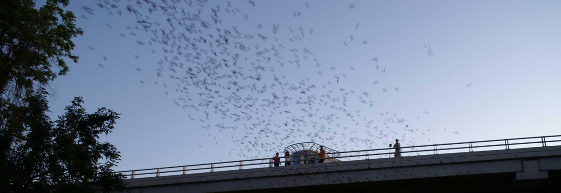 waugh bats