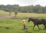 Horseback Riding on Maui