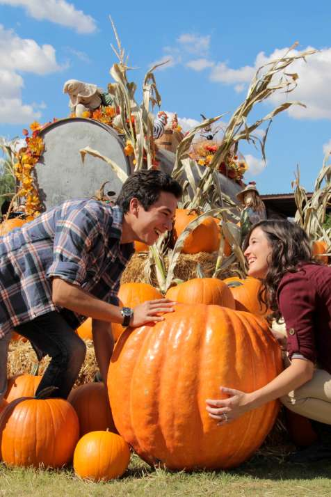 Couple In Pumpkin Patch