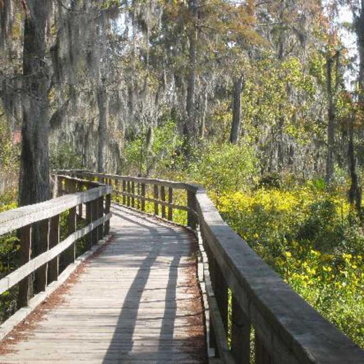 Wetland Trace - Lafitte Baratari