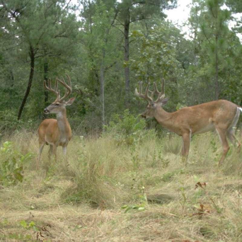 Fort Bragg Wildlife