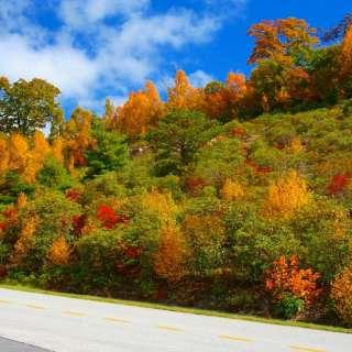 Asheville Selected as the #1 Fall Foliage Destination by TripAdvisor®