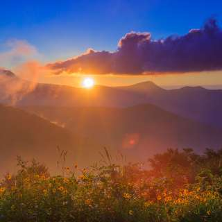 Sunrise over the mountains illuminates a field of wildflowers near Asheville.