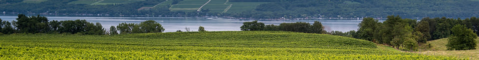 Lakewood Vineyard on Seneca Lake - Photo by NYS ESD