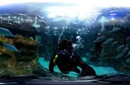 Video Thumbnail - vimeo - NC Aquarium at Fort Fisher