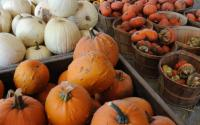 Schoharie County Open Market outside of Middleburg
