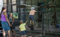 Utica Zoo 512