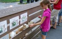 Utica Zoo 518
