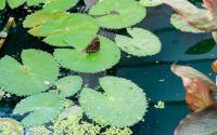 Joseph L. Popp, Jr Butterfly Conservatory