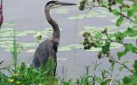 Montezuma National Wildlife Refuge 1466