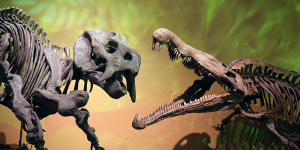 The Albuquerque Museum of Natural History features dinosaur skeletons like these two happy guys.