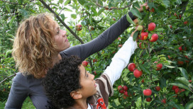 County Line Orchard Things to Do Hobart Apples