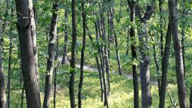 Cowles-Bog-3