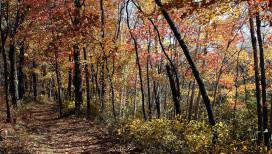 Indiana Dunes National Lakeshore Cowles Bog Trail