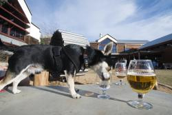 New Belgium Brewing - Pet Friendly Patio Dog