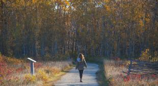 FortWhyte Alive_woman walking_trail_fall forest