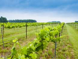 Celebrate NC Wine & Grape Month in Rowan County