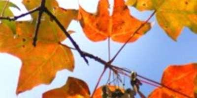 Asheville Area Fall Color Report