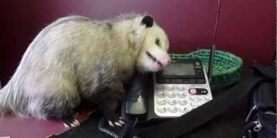 Phoning with Fern
