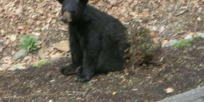 Bear Sighting!