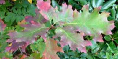 September 23 Fall Color Report