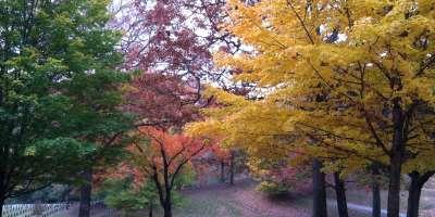 Riverside Cemetery in Fall