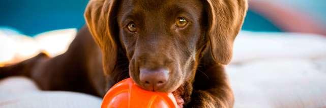 doghotels__hero.jpg
