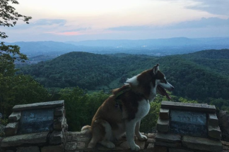 Best Trails to Bring Your Dog