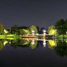 Summer Evening Public Garden