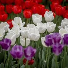 Tulip Time Day at the Lake celebrated by 4,000+